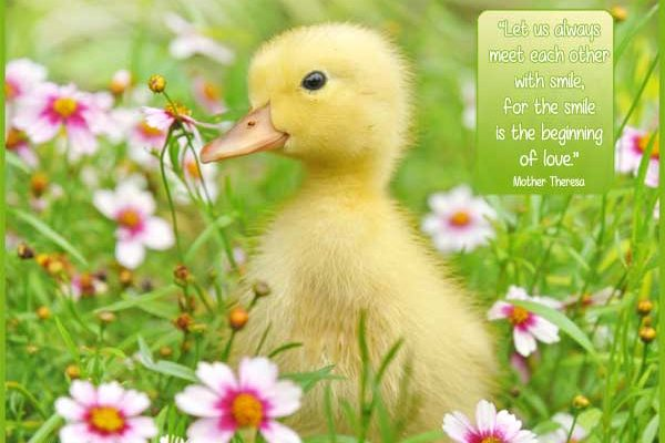 """Motivational quote """"Let us always meet each other with smile, for the smile is the beginning of love."""" Mother Theresa"""