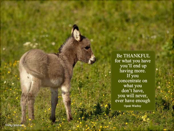 Little donkey photo with quote by Ophrah Winfrey