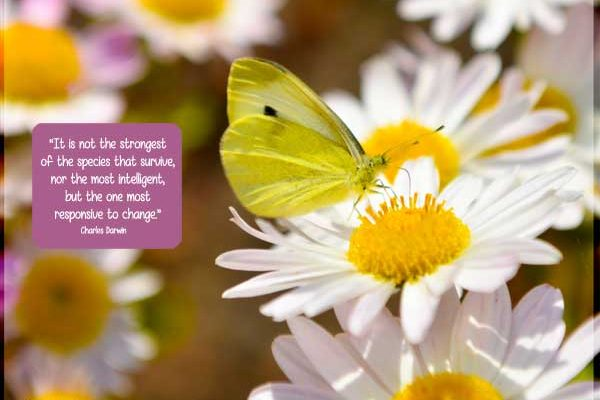 """Motivational Quote: """"""""It is not the strongest of the species that survive, nor the most intelligent, but the one most responsive to change."""" Charles Darwin"""